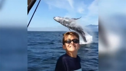 imageboy and whale